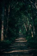Beautiful-Forest-Path-in-Bardiya-National-Park