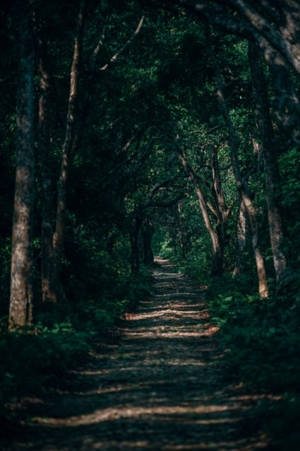 Beautiful-Forest-Path-in-Bardiya-National-Park