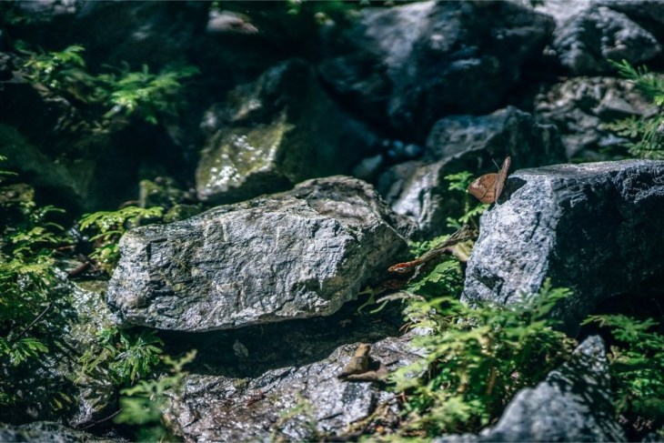 Brown-Butterfly-sitting-on-a-Rock-Surrounded-by-Plants