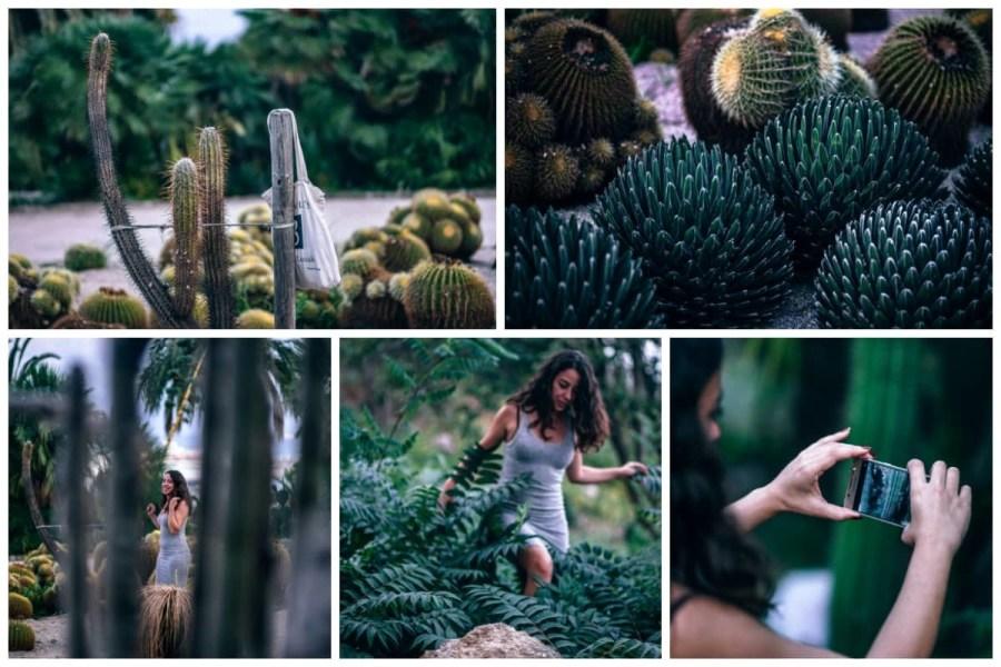 Cactus-Park-preview-2