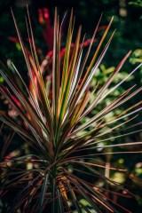 Close-up-Shot-of-a-Tropical-Plant