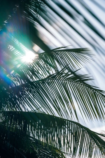 Sun-Shining-Through-Palm-Tree-Leaves