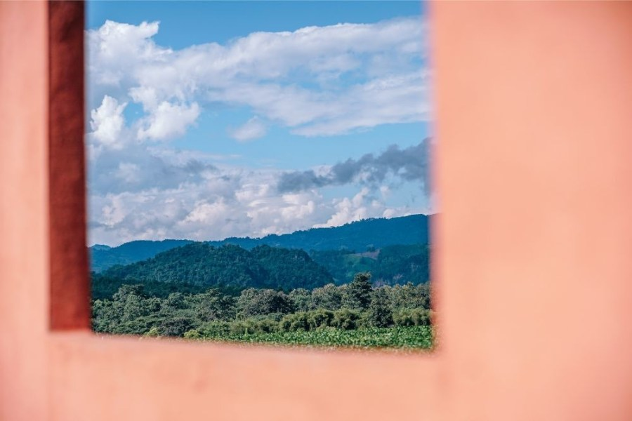 The-Choui-Fong-Tea-Plantation-Photographed-Through-a-Window