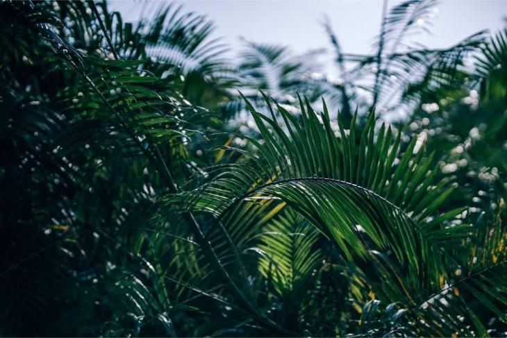 Tropical-Greenery-at-a-Nepali-Village