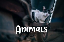 Free Public Domain Photos of Animals