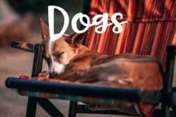 Dogs-min