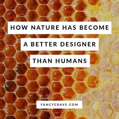 How-Nature-Has-Become-a-Better-Designer-Than-Humans-min