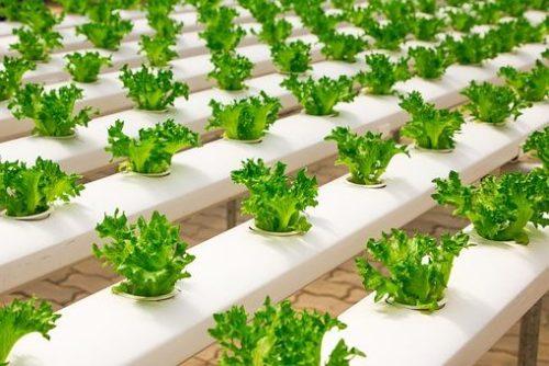 Hydroponics Vs Aquaponics; Soil-less Farming guide
