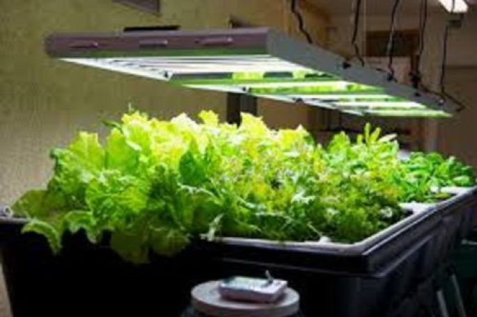 Indoor Garden Systems Tips for choosing the best grow lights for your aquaponics best indoor grow lights workwithnaturefo