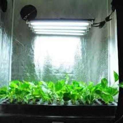 fluorescent best grow lights