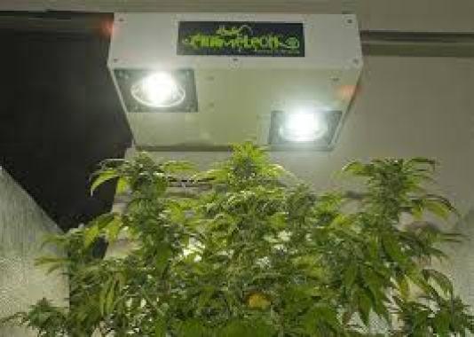 plasma indoor grow lights