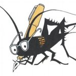What is Moon Cricket   Moon Cricket Meaning   Moon Cricket Definitions   Everything You Need To Know