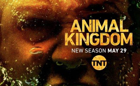 Animal Kingdom - The Hyenas