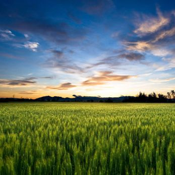 field_at_sunset_hd1080p