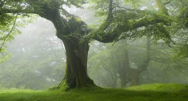 Árboles poderosos