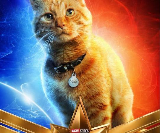 Marvel-ous Monday: Who is Goose (AKA That Cute Cat from