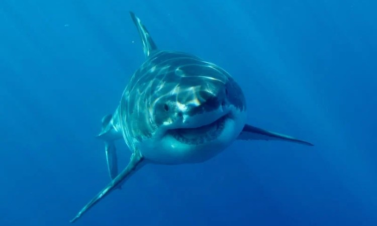 Discovery Announces Its Fin-tastic Shark Week 2019 Programming
