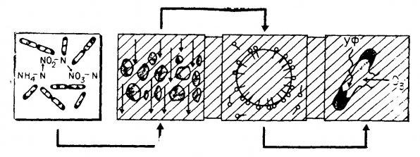 Суды тазарту процесінде биологиялық тазарту орны