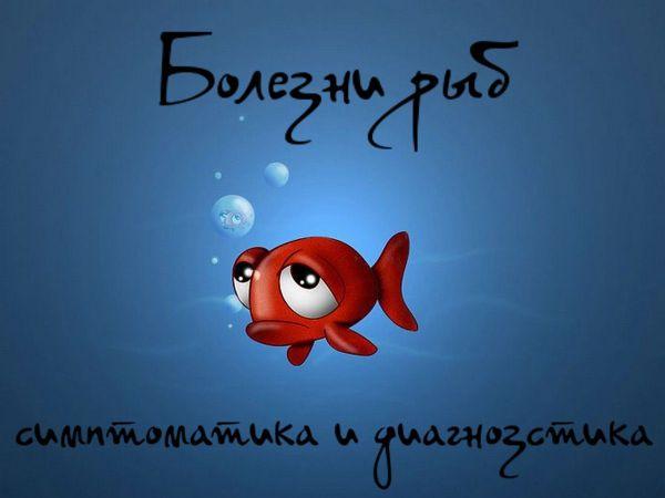 Симптомы болезней аквариумных рыб и их диагностика: фото и ...