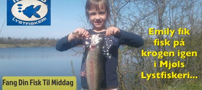 Mjøls Lystfiskeri – Fint vejr og en flot regnbueørred