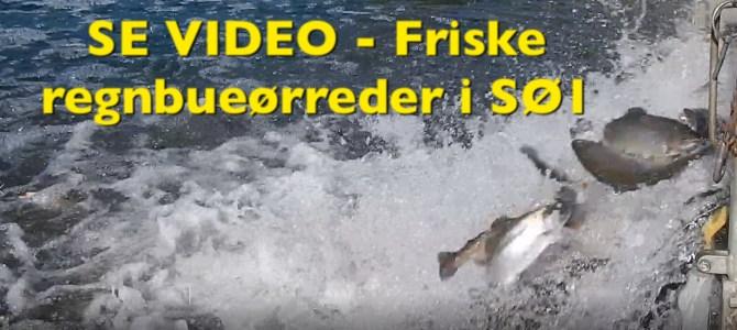 SE VIDEO – Mjøls Lystfiskeri SØ1 – Friske regnbueørreder i dag – 08-06-2018