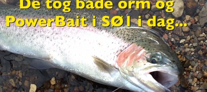 Mjøls Lystfiskeri: I SØ1 var de både til PowerBait og orm