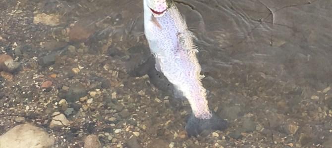 Mjøls Lystfiskeri: – Få nu købt den gennemløber…