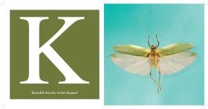 K --Katydid