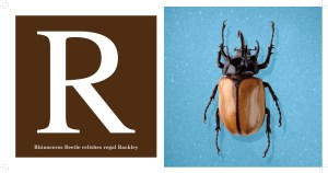 R --Rhinoceros Beetle from The Alphabet of Bugs