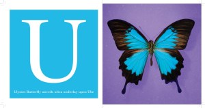 U -- Ulysses Butterfly from The Alphabet of Bugs