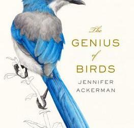 The Genius of Birds by Jennifer Ackerman Cover