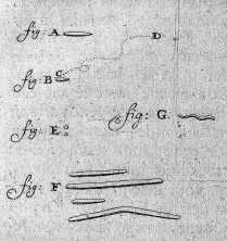 Leeuwenhoek%20bacteria%201683