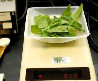 02_weigh_spinach_PB202299