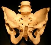pelvis_male_anterior_PB121176