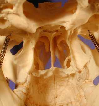 nasal_cavity_inside_PA281062
