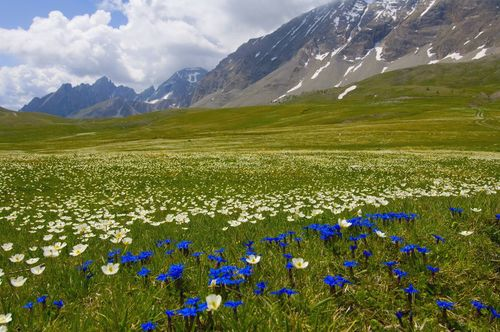 wildflower bucketlist nicepictures