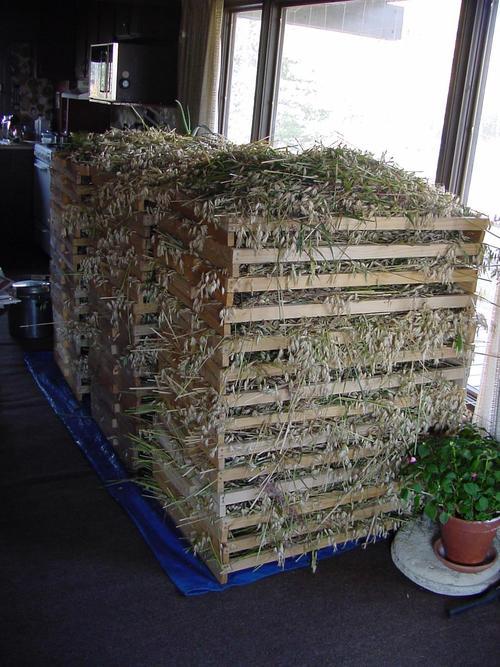 Contest Gardening FoodStorage