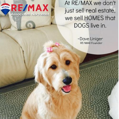 dog canine friendship puppy animal
