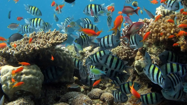 Reef and Fishes