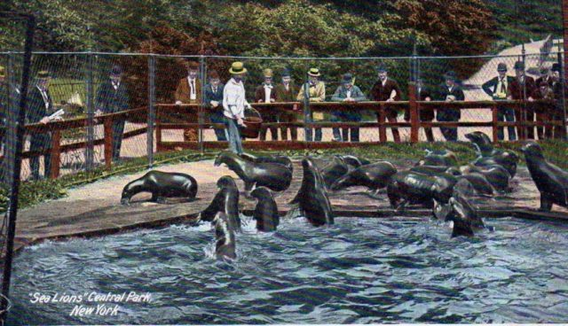 CENTRAL PARK ZOO - most fascinating zoos
