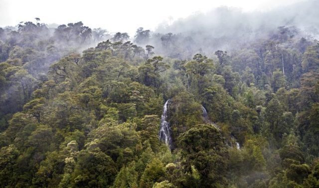Valdivian Temperate Rainforest - Biggest Rainforests