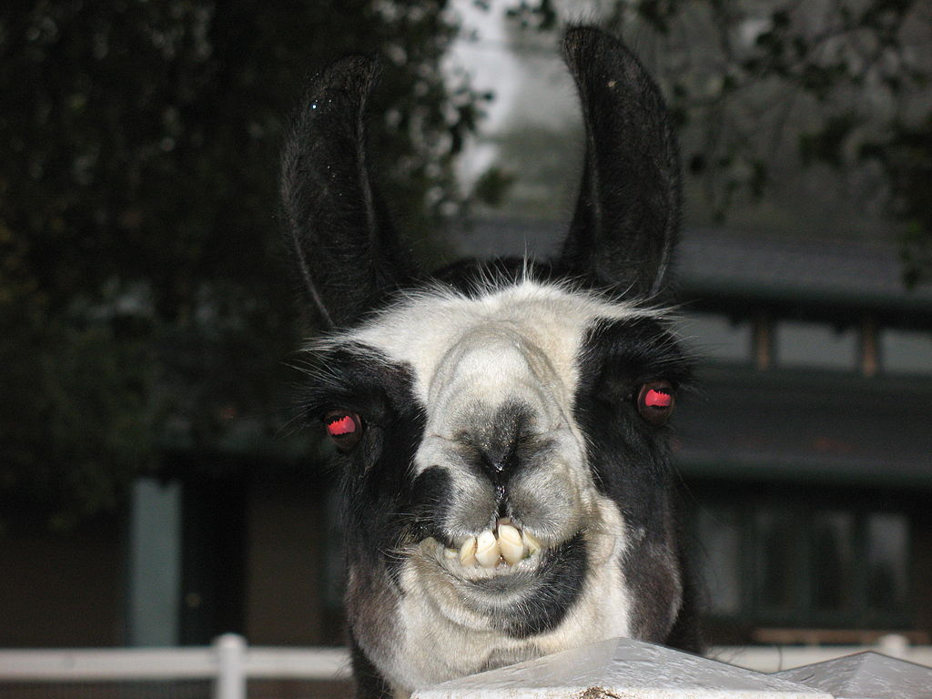 llama with red eyes