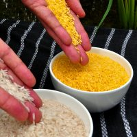 Vitamin A enriched rice, developed nearly 15 years ago, could have prevented hundreds of thousands of cases of childhood blindness. It has never been used due to concerns over GMO foods.