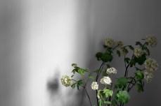 Norr Mälarstrands Blommor