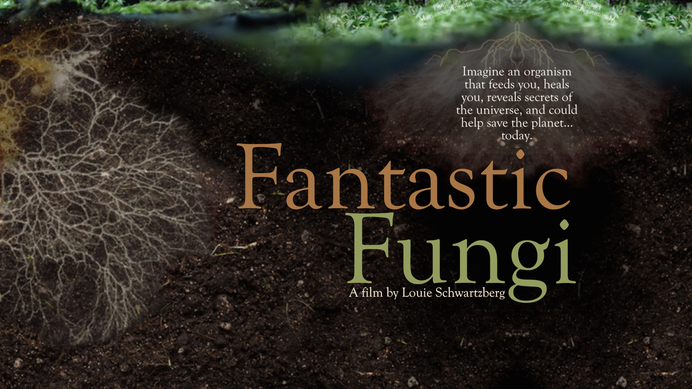 Simard's study discovered that fungi in fact attach to the roots of multiple trees of different. Fantastic Fungi A Film By Louie Schwartzberg On Mycelial Connection