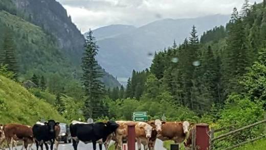 Koeien Grensbewaking in Oostenrijk opgeschroefd