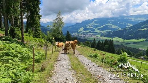 Grenscontrole Brixen im thale koeien