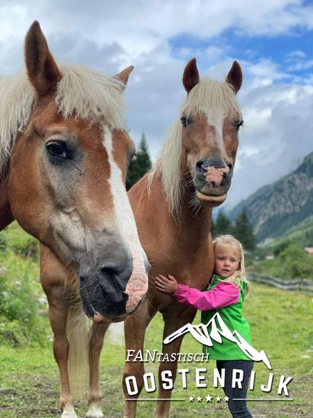 Pitztal paarden