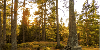 Bautaen på Spinneren i solnedgang - Oslomarka - Østmarka - Fantastiske marka