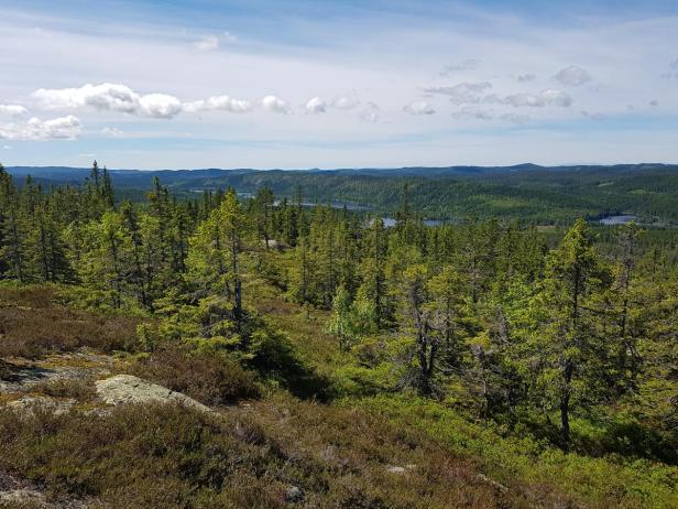 Utsikt fra Kollern mot Pershusfjellet Ringkollen og Gyrihaugen - Nordmarka - Oslomarka - Fantastiske marka